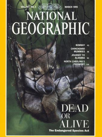 Cover of the March, 1995 National Geographic Magazine