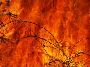 Fire Consumes the Prairie by Joel Sartore