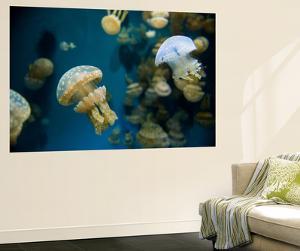 Spotted Jellyfish, Medusa Moteada, at the Monterey Bay Aquarium by Joel Sartore