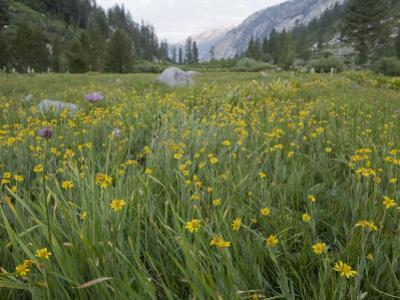 Wild Flowers Growing in King Canyon National Park
