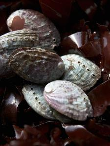 Abalone (Sea Snail) with Seaweed by Joerg Lehmann