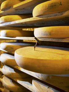 Comte Cheeses with Cheese Tester in Fort de Rousse Cheese Cellar by Joerg Lehmann