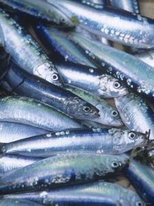 Freshly Caught Sardines (Brittany, France) by Joerg Lehmann