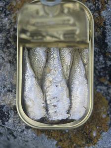 Sardines in a Tin by Joerg Lehmann