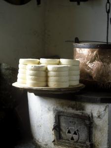 Unripe Munster Cheese by Joerg Lehmann