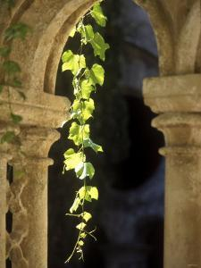 Vine Tendrils on Old Pillars, Chateau Valmagne, Languedoc by Joerg Lehmann