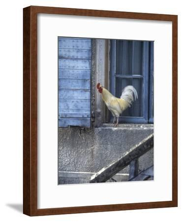 White Rooster on Window Ledge