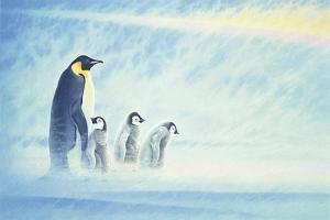 Arctic Home by Joh Naito
