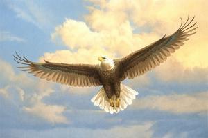 Bald Eagle by Joh Naito