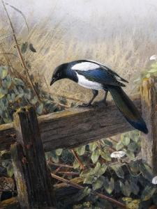 A Magpie Observing Fieldmice by Johan Gerard Keulemans