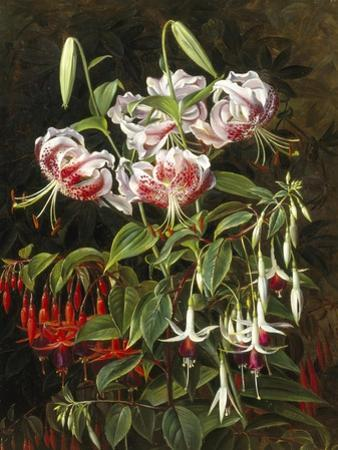 Rubrum Lilies and Fuchsias
