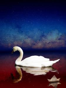 Bird Kingdom 4 by Johan Lilja