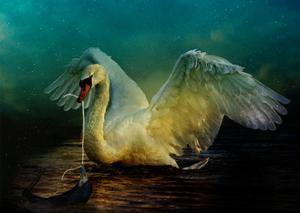 Bird Kingdom 6 by Johan Lilja