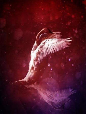Bird Kingdom 7
