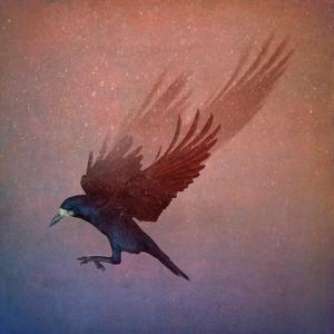 crow by Johan Lilja