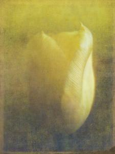Tulip by Johan Lilja