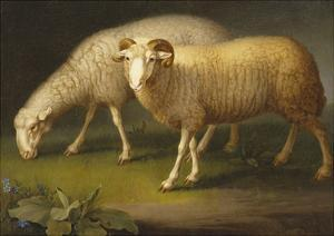 A Ram and a Sheep by Johan Wenzel Peter