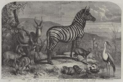 Group of Animals Lately Received at the Gardens of the Zoological Society, Regent's Park by Johann Baptist Zwecker