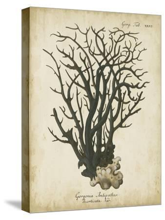 Esper Antique Coral I