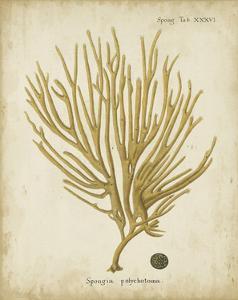 Esper Antique Coral IV by Johann Esper