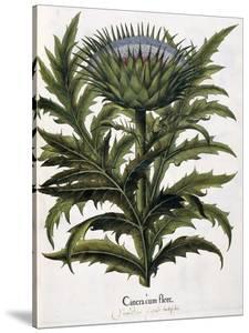 Cinera Cum Flore, 1613 by Johann Georg Ziesenis