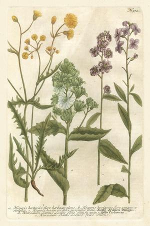 Weinmann's Garden VI