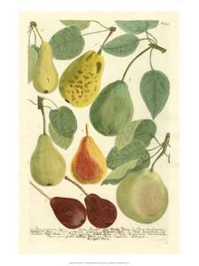 Plentiful Pears I by Johann Wilhelm Weinmann