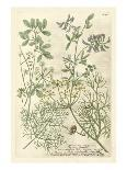 Fern Gathering I-Johann Wilhelm Weinmann-Art Print