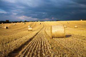 Baled Field, Gloucestershire, England, United Kingdom, Europe by John Alexander