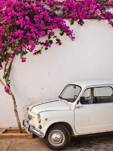 Fiat under Tree in Mojacar, Andalucia, Spain, Europe by John Alexander