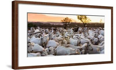 Goats in Andalucia, Spain, Europe