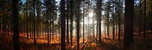 Moreton Forest, Dorset, England, United Kingdom, Europe by John Alexander
