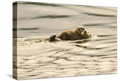 A Mother Sea Otter Swims on Her Back as Her Baby Rests on Her Stomach in Alaskan Waters