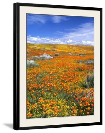 California Poppy Reserve, Lancaster, California, USA