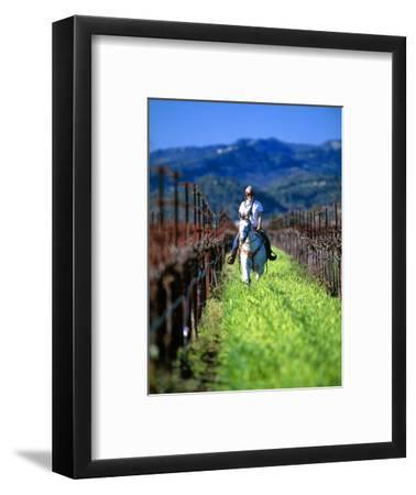 Equestrian Riding in a Vineyard, Napa Valley Wine Country, California, USA