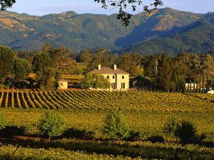 Estate and Vineyard, Napa Valley, California by John Alves