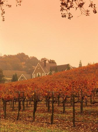 Silver Oak Cellars Winery and Vineyard, Alexander Valley, Mendocino County, California, USA