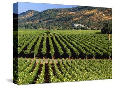 Wine Country, Napa Valley, California