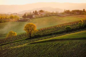 Tuscan Vinyards by John and Tina Reid