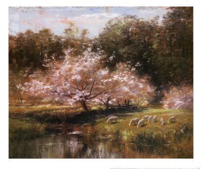 Sheep Grazing Under Apple Blossoms