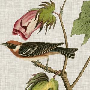 Avian Crop VI by John Audubon