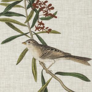Avian Crop VII by John Audubon