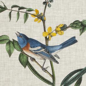Avian Crop VIII by John Audubon