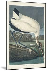 Pl 216 Wood Ibis by John Audubon