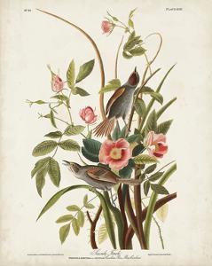 Pl 93 Seaside Finch by John Audubon
