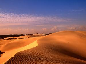 Animal Tracks on Sand Dune in Little Sahara Desert, Australia by John Banagan