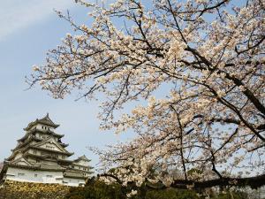 Himeji-Jo (Castle) and Blossoms by John Banagan