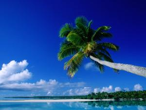 Palm Tree Over Aitutaki Beach and Lagoon, Aitutaki, Southern Group, Cook Islands by John Banagan