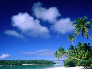 Palm Trees on Aitutaki Lagoon, Aitutaki, Southern Group, Cook Islands by John Banagan