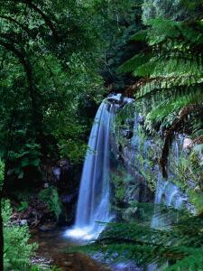 Russell Falls with Ferns in Foreground, Mt. Field National Park, Australia by John Banagan